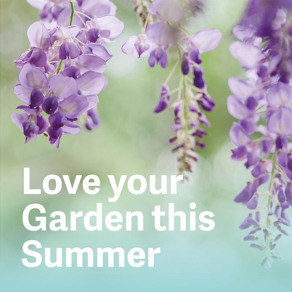 Summer Garden Inspiration
