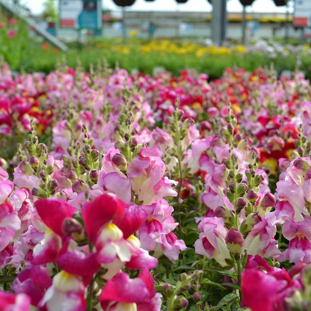 Summer bedding plant sale